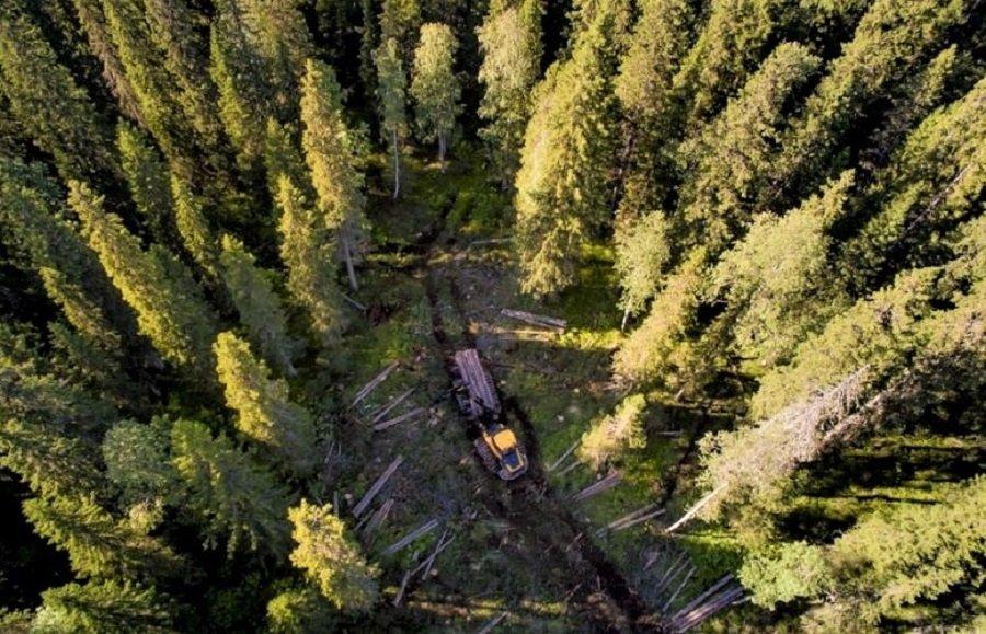 Segezha Group участвует в работе по предупреждению лесных  пожаров