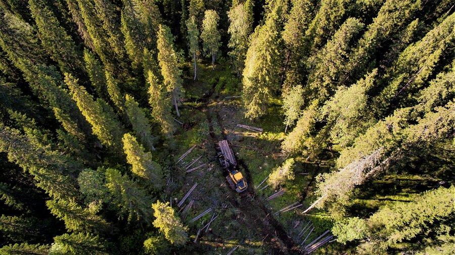 Segezha Group интенсифицирует лесопользование в Карелии
