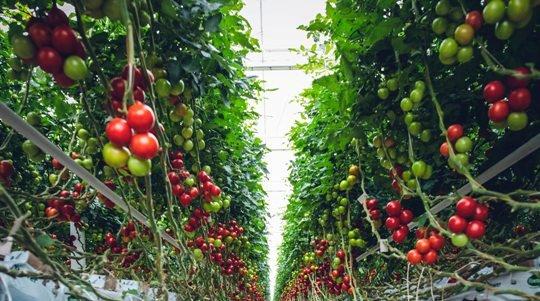 Потепление климата делает нашу пищу менее питательной