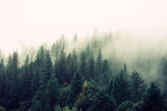 Лидер мирового потребрынка вырубает леса вопреки возражениям акционеров