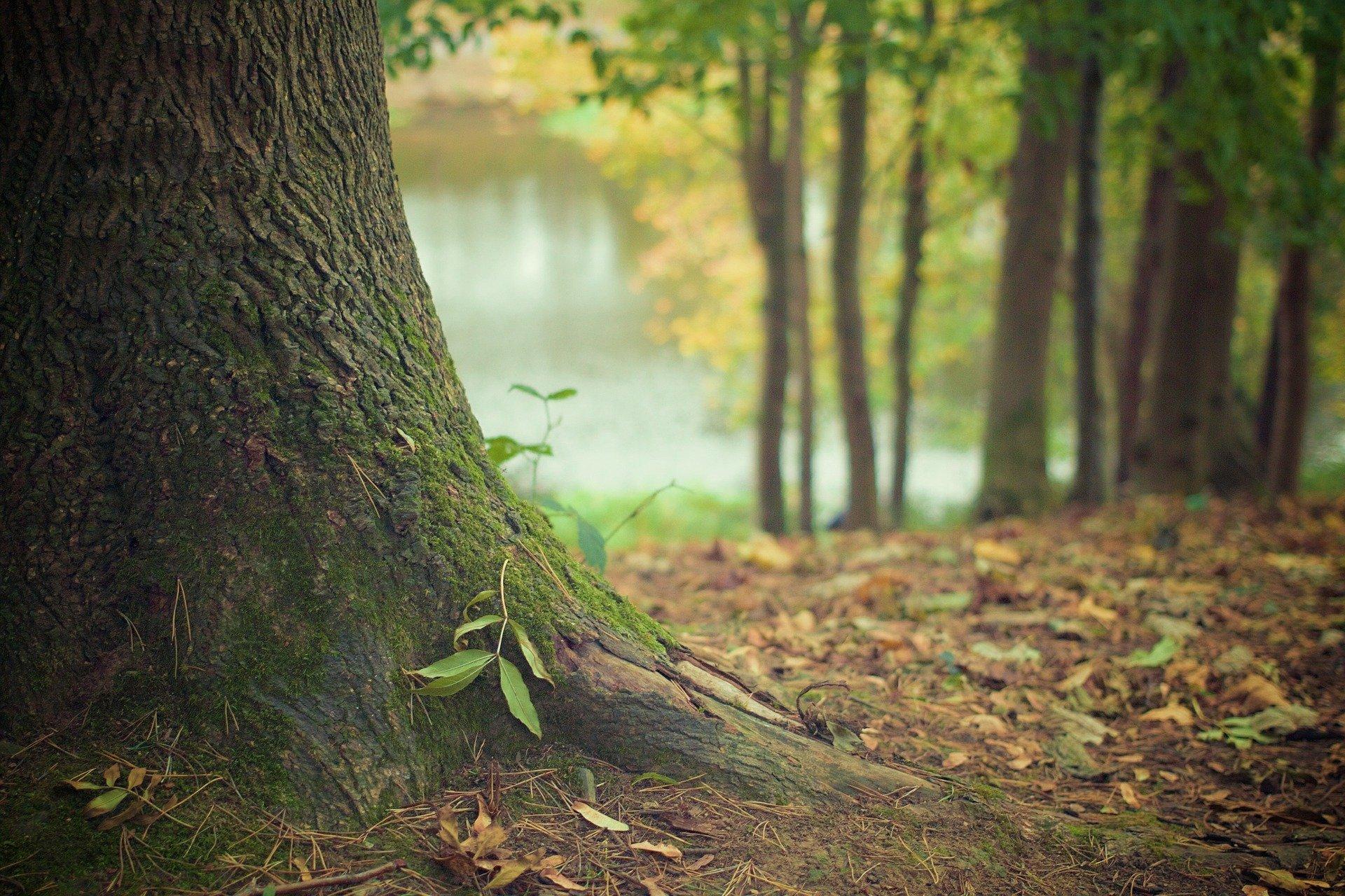 Ученые придумали, как восстанавливать леса с помощью отходов от кофе