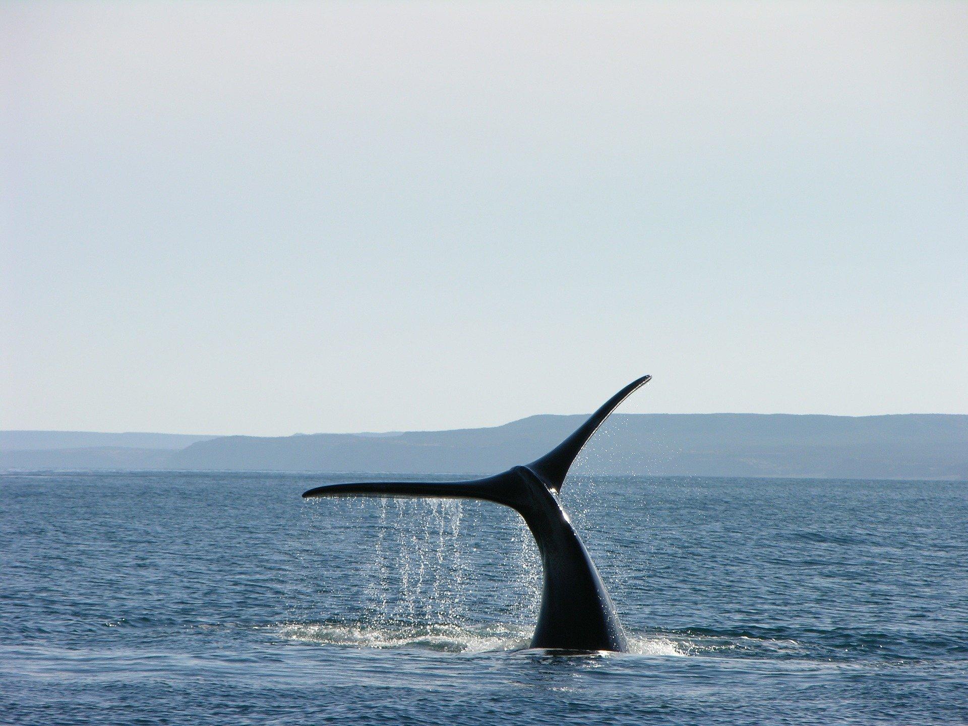 Минсельхоз предложил запретить экспорт китов, дельфинов и морских свиней