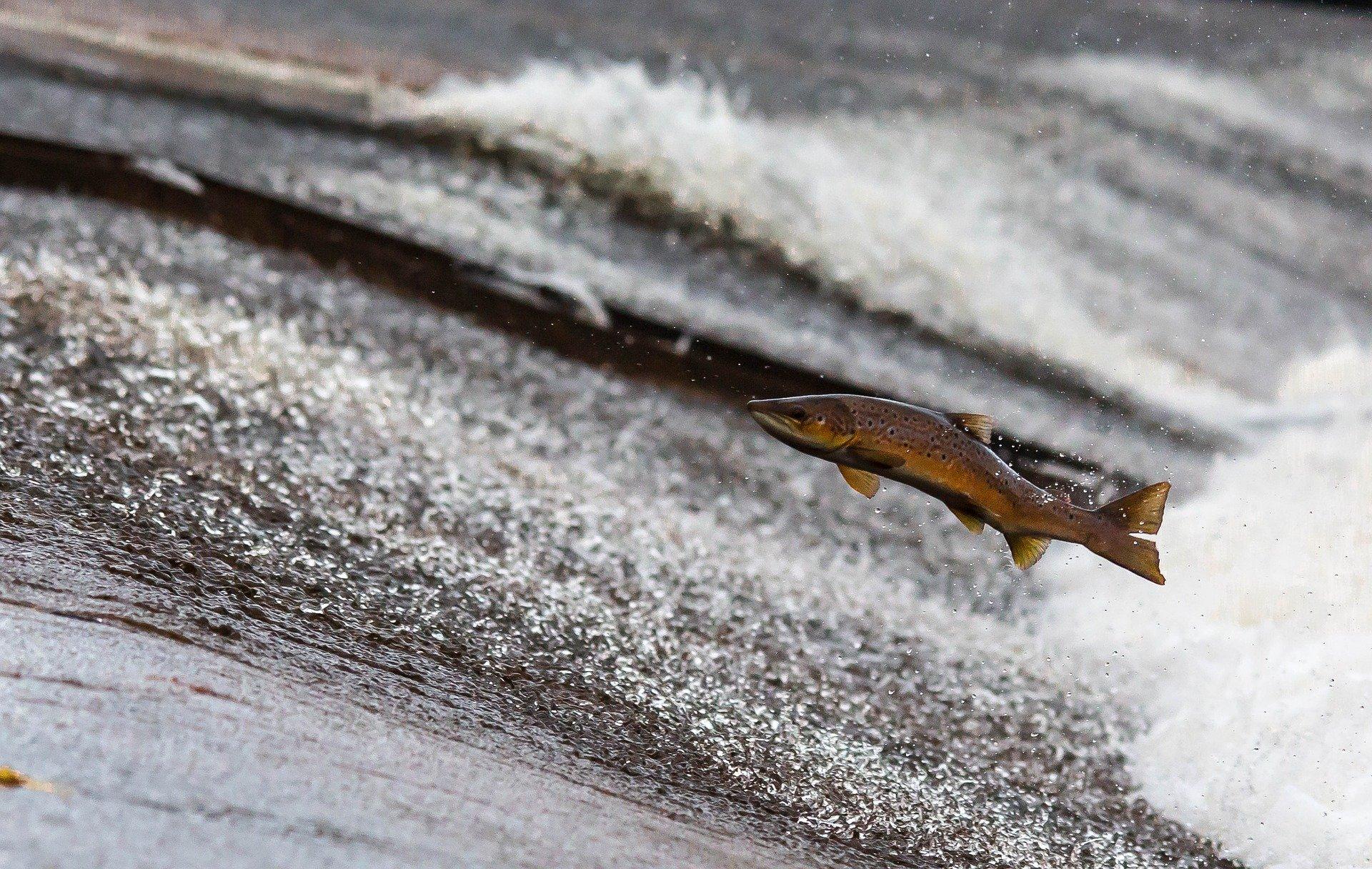 Канадские химики придумали эко-замену из рыбных отходов для полиуретана