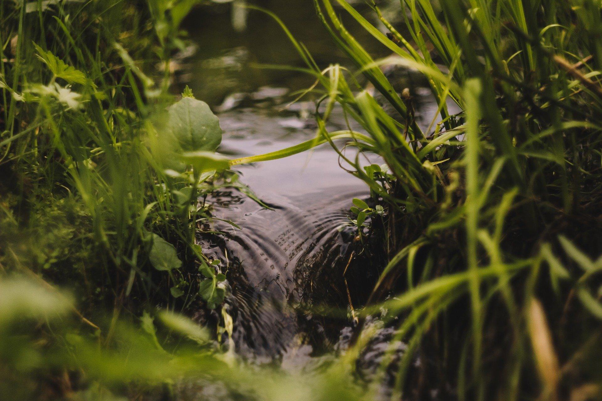 Томские ученые изобрели способ очищения воды и почвы от нефти