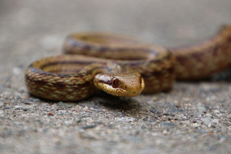 Уровень радиации в Фукусиме измерили с помощью змей