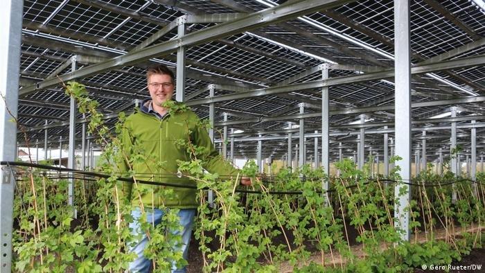 Парниковые установки в сельском хозяйстве предлагают заменить солнечными электростанциями