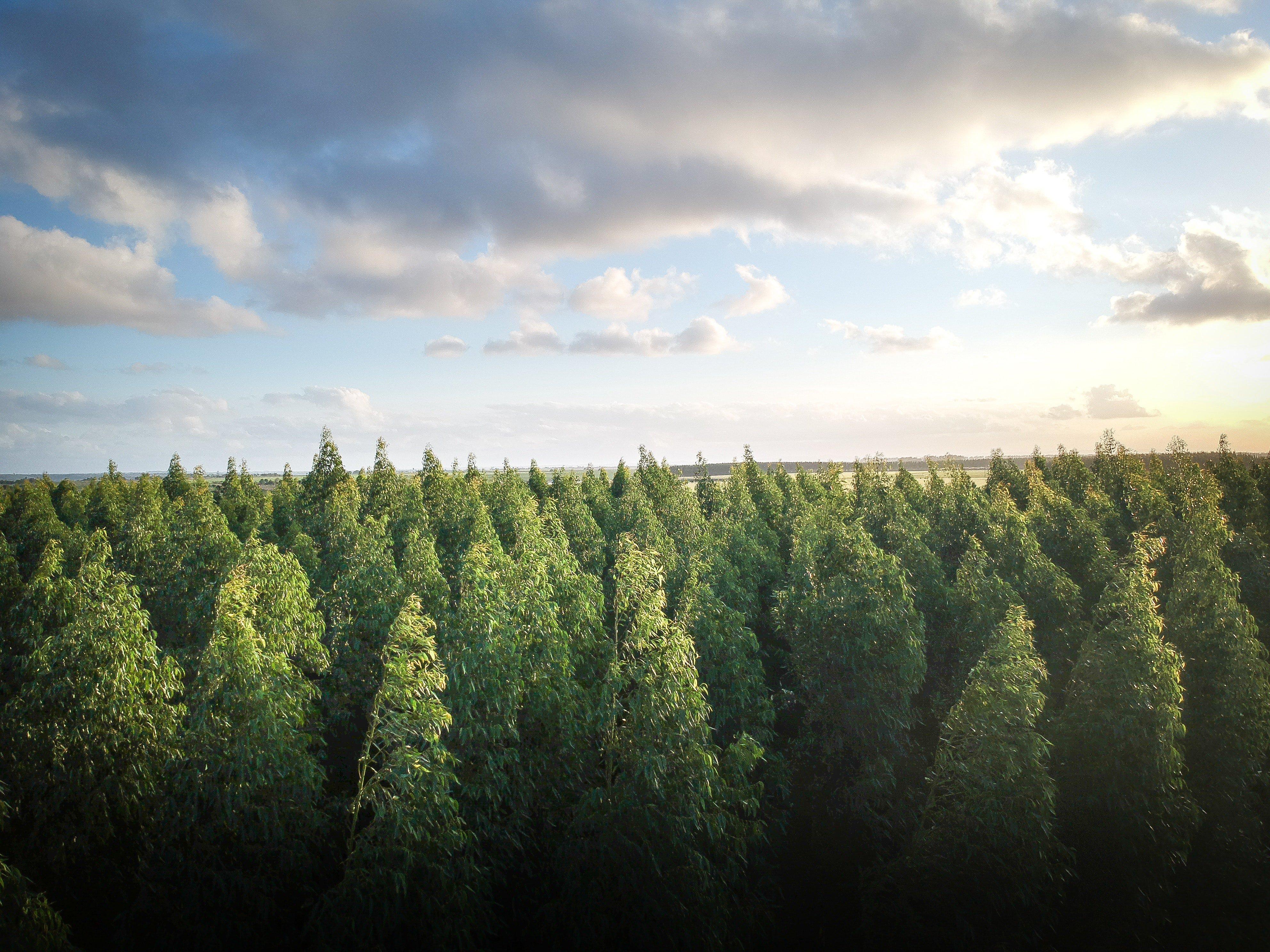 «Сегежа Групп» проводит мероприятия по сохранению биоразнообразия
